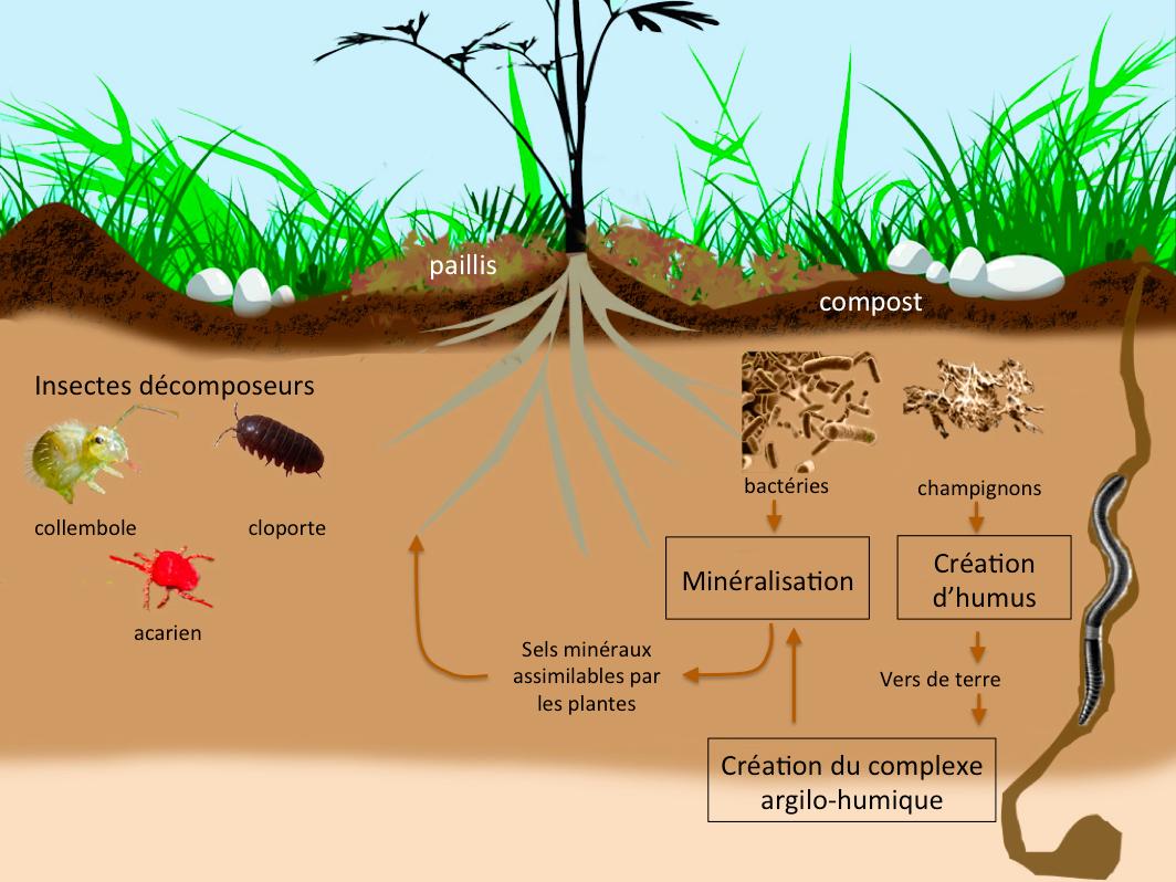 Comment ça fonctionne ? - monjardinenpermaculture.fr