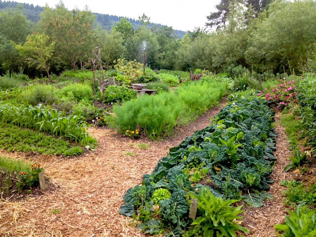 La butte for Permaculture terrasses et buttes