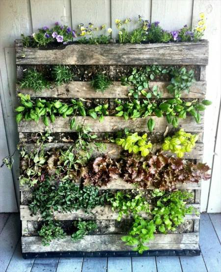 potager balcon permaculture